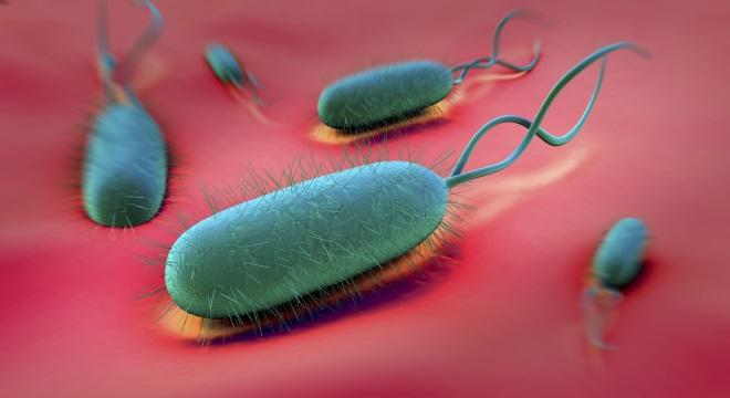 Микробактерия