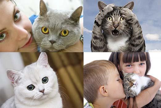 Кошачий лишай