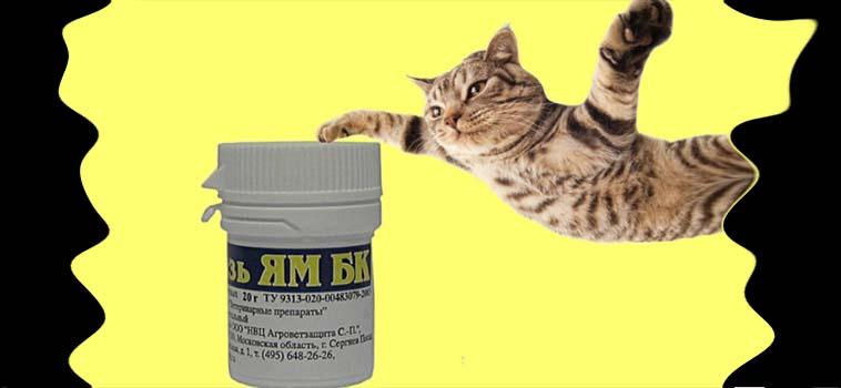 Лечение лишая у кошек в домашних условиях