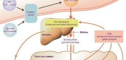 Причины появления билирубина в организме